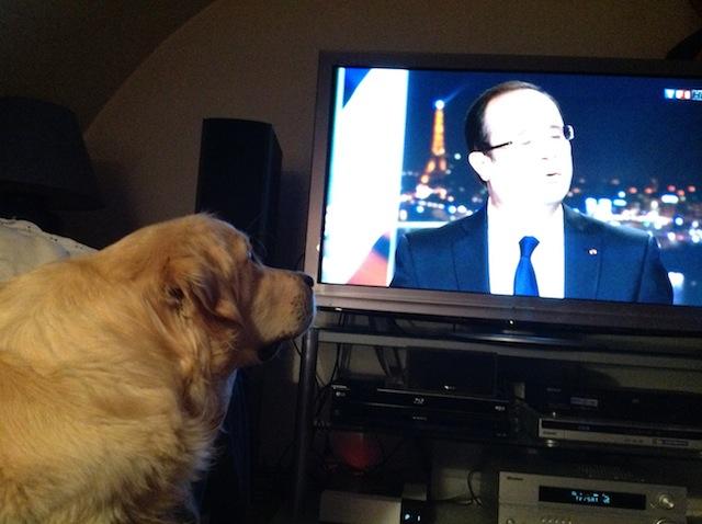 Je ne sais pas si ce programme télévisé est très relaxant pour notre chien Frisco - (CC) Christophe Lachnitt