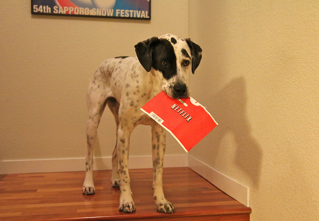 Netflix, le chien dans le jeu de quilles télévisuel - (CC) Phil King