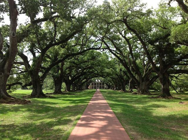 Une plantation du sud des Etats-Unis - (CC) Christophe Lachnitt