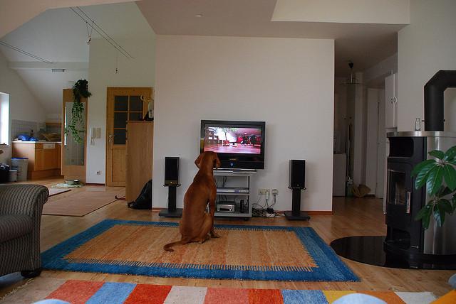 Ce téléspectateur est indifférent au charme des pratiques multi-tâches devant la télévision - (CC) Markus